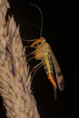 Unbekanntes InsektNr. 65261609. Juli 2018